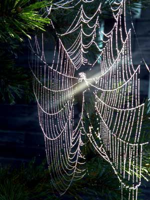 Photo of spiderweb taken by Roz.